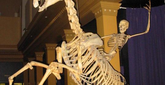 Scheletro (anatomia)